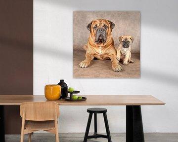Bullmastiff mit Welpe von Tony Wuite