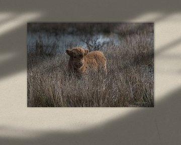 Verstopt in het gras van Marc van Tilborg