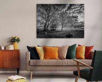 Kroeze-Baum Schwarz-Weiß von Freddy Hoevers