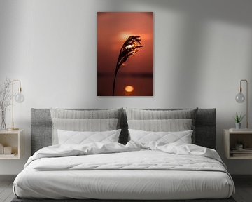 Schilf vor Sonnenuntergang von Robert Snoek