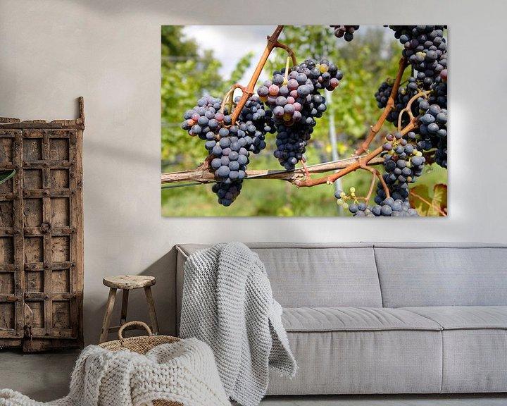 Sfeerimpressie: Druiven voor de wijn van Judith van Bilsen