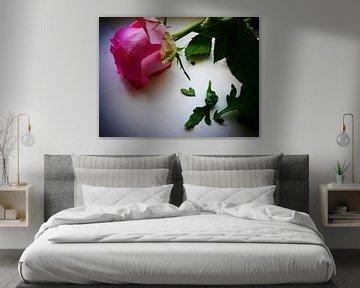 Rosa Rose von Birdy May