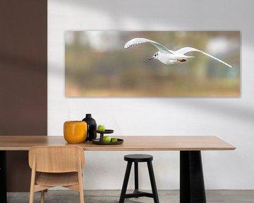 Die Flügel meines Fluges von Fotografie Jeronimo