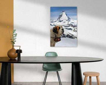 Bernhardiner posiert für das Matterhorn, Schweiz von Henk Meijer Photography