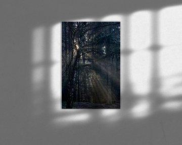 Sunrice in the forrest van Robert Jan Smit
