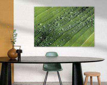 Raindrops van Larka Louwe