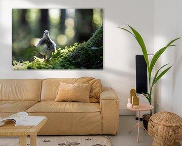 Duif, duif van Karin Luttmer