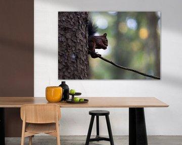 Eekhoorn op een boom tegen het licht, Eekhoorn op een boom in het achterlicht van Karin Luttmer