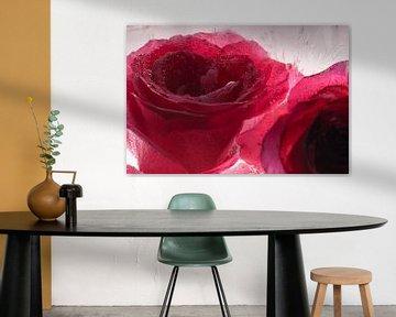 Rode roos in kristalhelder ijs 2 van Marc Heiligenstein