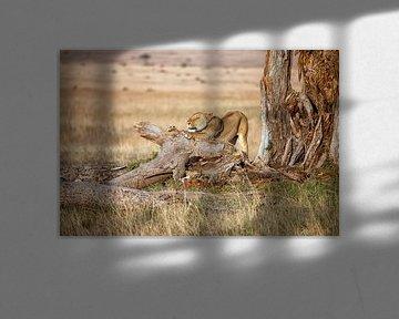 Ontwakende leeuwin van Angelika Stern