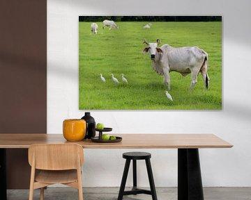 Paysage avec des vaches et des hérons sur Fred Lenting