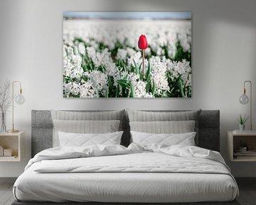 Rote Tulpe zwischen Hyazinthen von Yana Spiridonova