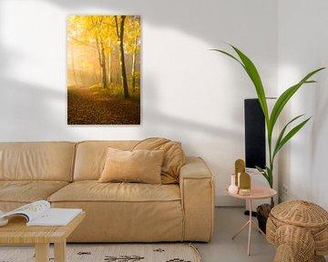 Gouden herfst van Denis Feiner