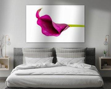 stilleven horizontale Aronskelk van Ineke Huizing
