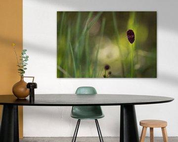 Einzelne braune Büte in einer Märchenwiese, Enige bruine biet in een sprookjeweide von Karin Luttmer