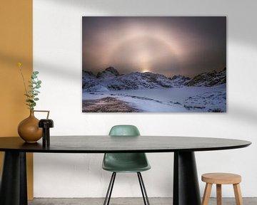 Zonnehond Lofoten van Peter Poppe