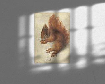 Rotes Eichhörnchen, Hans Hoffmann