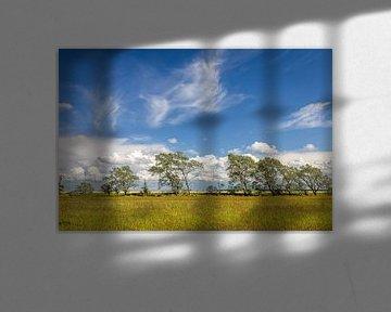 Windflüchter Bäume bei Zingst nach dem Sturm von Christian Müringer