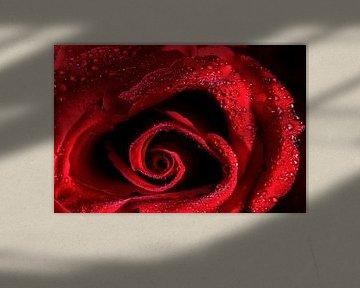 Rode Roos von Joost Lagerweij