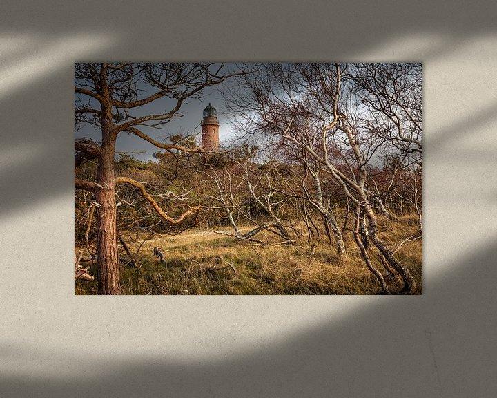 Beispiel: Windgebeugte Bäume beim Leuchtturm Darßer Ort von Christian Müringer