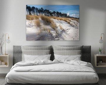 Dünen am Strand von Zingst im Winter von Christian Müringer