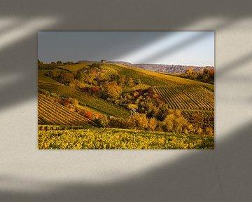 Wijngaarden in Stuttgart in de herfst van Werner Dieterich