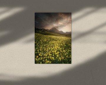 Sonnenwiese Dolomiten von Peter Poppe