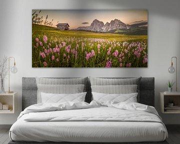 Bergwiese Dolomiten von Peter Poppe