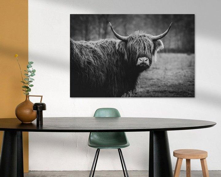 Sfeerimpressie: Close-up van een Schotse Hooglander Koe in Nederland in zwart-wit van Maarten Oerlemans
