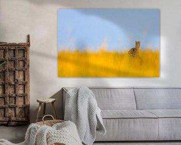Ein Kaninchen in einem schönen Feld mit gelbem Gras. von Bas Meelker