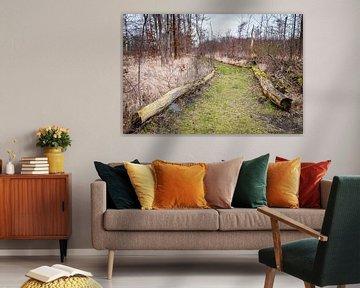 Sentier forestier dans la zone de loisirs de Suyderoogh sur Evert Jan Luchies