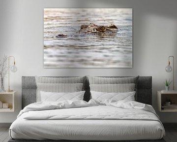 Krokodil im Sambesi von Angelika Stern