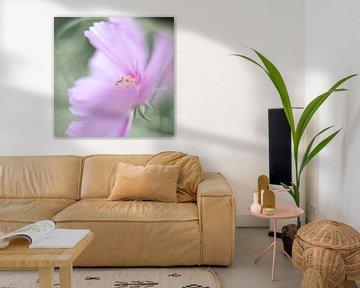 Wilde bloem van Vliner Flowers