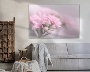 Kalanchoe van Vliner Flowers