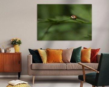 Lieveheersbeestje op blad met groene achtergrond van Angelique Koops