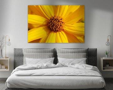 blühender Gelber Sonnenhut, Blume, Deutschland von Torsten Krüger