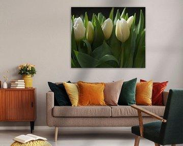 Frische weiße Tulpen in einer Reihe, frische weiße Tulpen in einer Reihe von J..M de Jong-Jansen