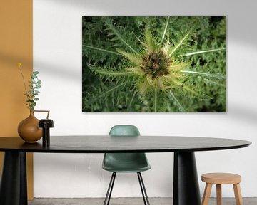 frische grüne Distel von Marije Zwart