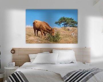 The cow van Yana