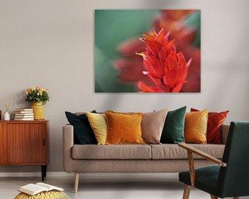 Rote Blume von Marije Zwart