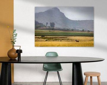 Wunderschöne Landschaften in Südafrika. von Claudio Duarte