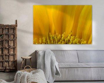 Sonnenblume von Margot van den Berg