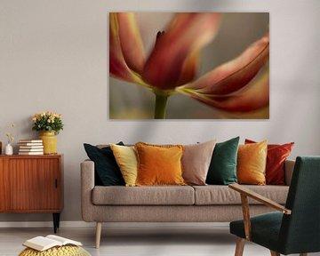 Rot und Gelb tulpe von Birgitte Bergman