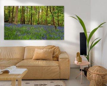 Blue Bells im Wald. von Licht! Fotografie