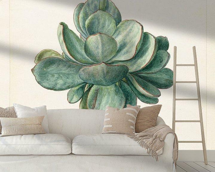 Sfeerimpressie behang: Succulente plant (Cotyledon orbiculata?), Herman Saftleven