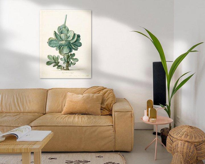 Sfeerimpressie: Succulente plant (Cotyledon orbiculata?), Herman Saftleven