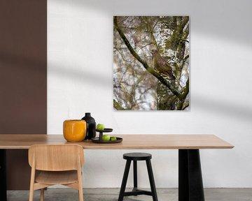 Buizerd in boom op de uitkijk in Nederlandse bossen
