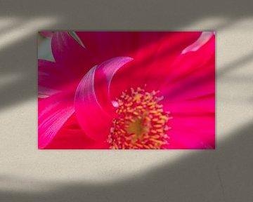 Kleurrijke lente bloemen extreme close-up paars roze van Marieke Feenstra