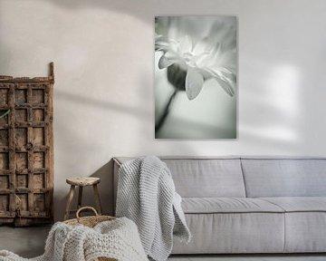 Abstrakte Gerbera-Blume von Lizet Wesselman