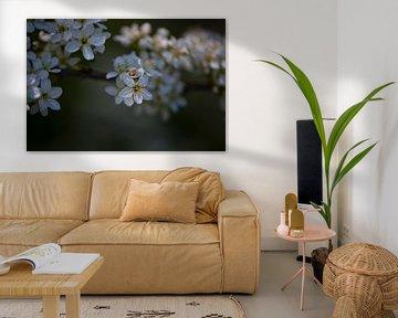 Witte lente bloesem van Lizet Wesselman